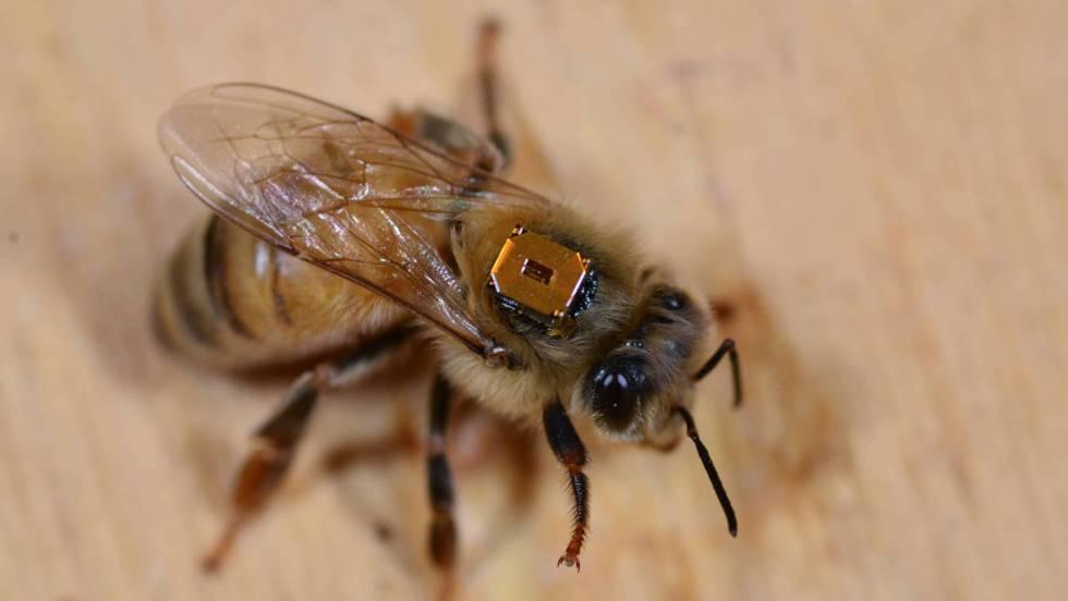 El caso de las abejas desaparecidas. - Página 3 1498753026_858601_1498760383_noticia_fotograma