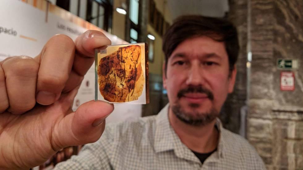 Hallada en España la garrapata más antigua del mundo, con 105 millones de años