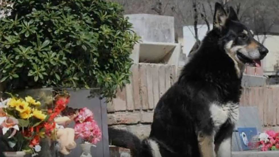Que pensais de los perros? - Página 5 1519142033_450757_1519202803_noticia_fotograma